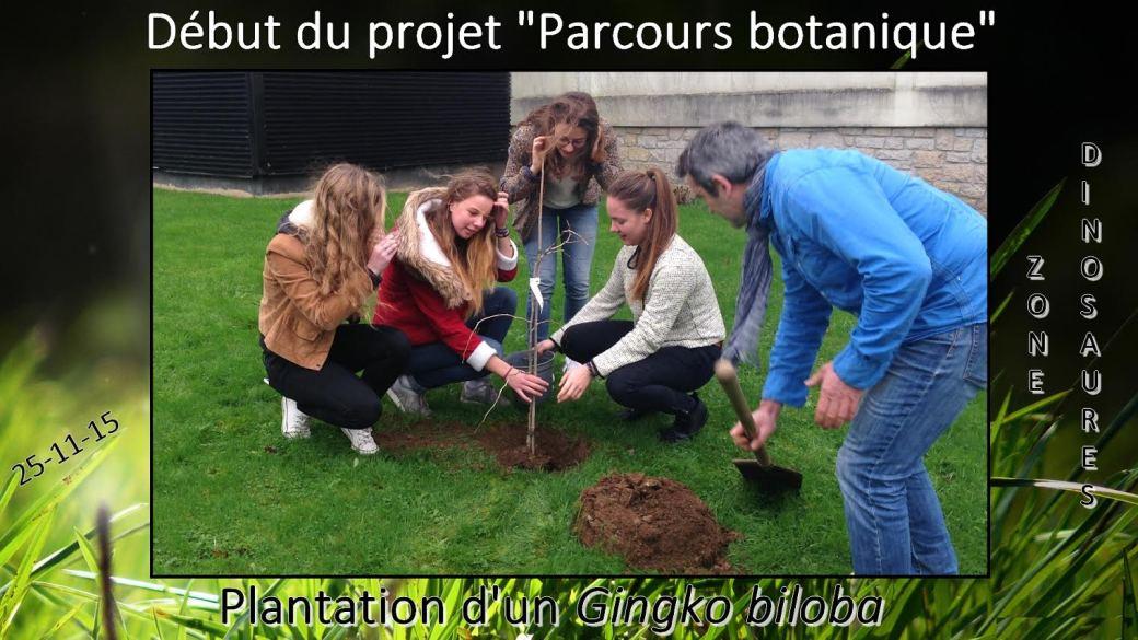 plantation arbre